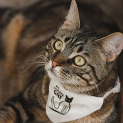 Cat collar - The Masked Cat-Petsochic