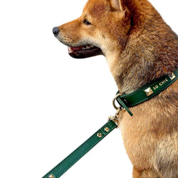 Dog collar - Forest Green-Petsochic