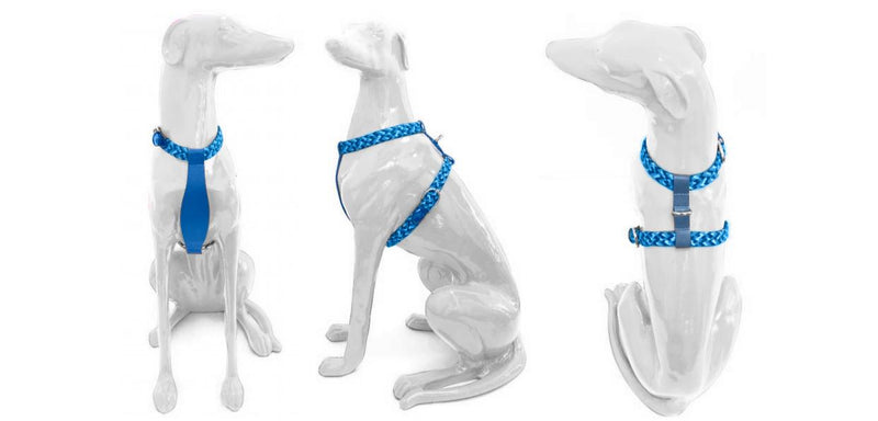 Y-Harness - Royal Blue-Petsochic