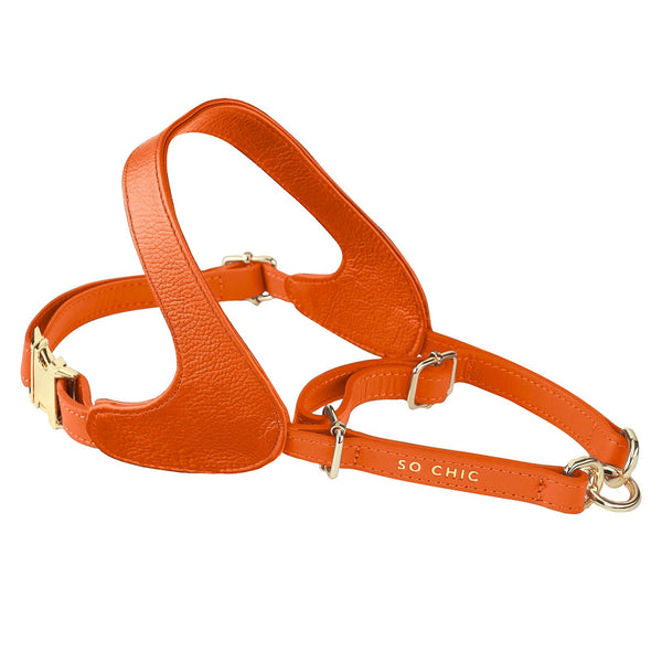 Harness - Orange Tangerine-Petsochic