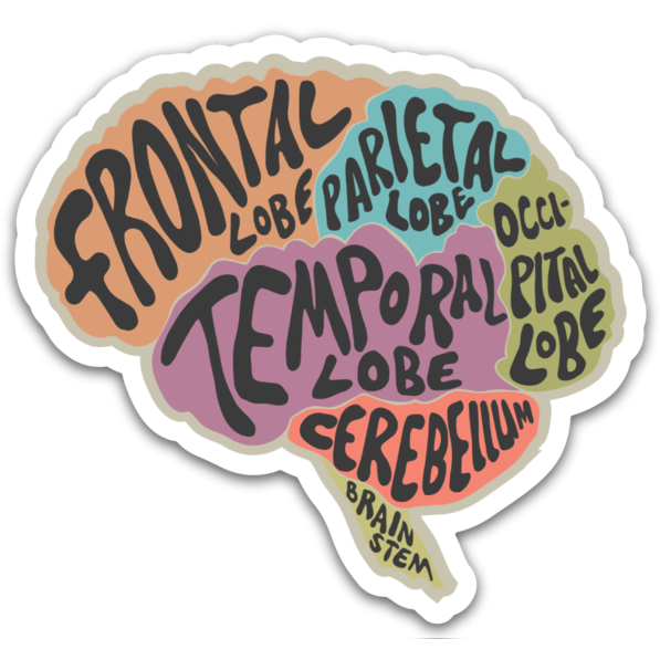 Anatomical Brain Sticker