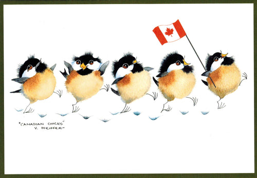 Canadian Chicks