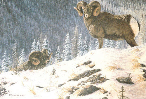 Alpine Grandeur - Big Horn Sheep