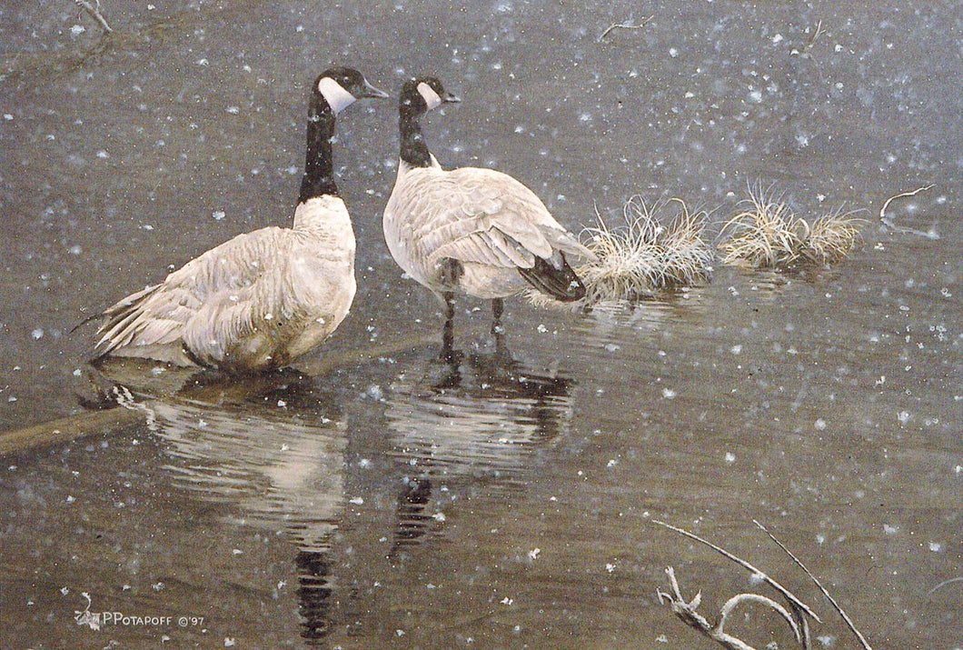 Snowed in - Canada Geese