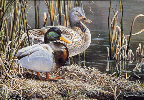 In Their Prime - Mallards