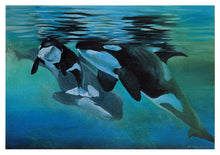 Life Cycle (Orcas)