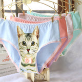 Spiffy Kitty Skivies