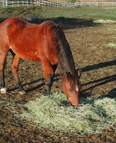 Give a gift that matters: a donation in your friend's name. This gift will buy a bale of hay which will provide a source of primary nutrition for a horse. Hay i