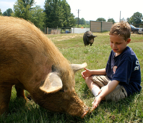 Give a gift that matters: a donation in your friend's name. Your gift will provide the rescued pigs with their absolute favorite food. As soon as the pigs see D