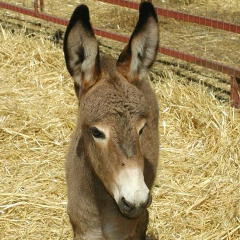 Give a gift that matters: a donation in your friend's name. The gift will provide hoof trimming for one donkey or horse in a developing country.