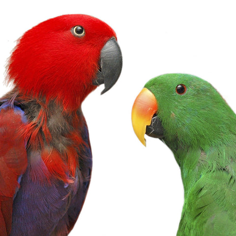 Give a gift that matters: a donation in your friend's name. Your gift will provide these parrots with regular flight time in a space where they can fly from per