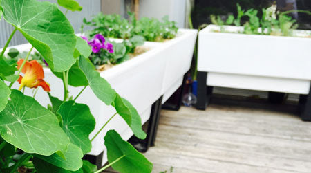 Small Space Gardening at Home