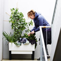 Woman tending to a modern indoor self watering planter box