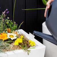 Watering a modern white planter box