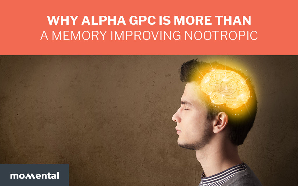 Why Alpha GPC is More Than a Memory Improving Nootropic | Momental Nootropics
