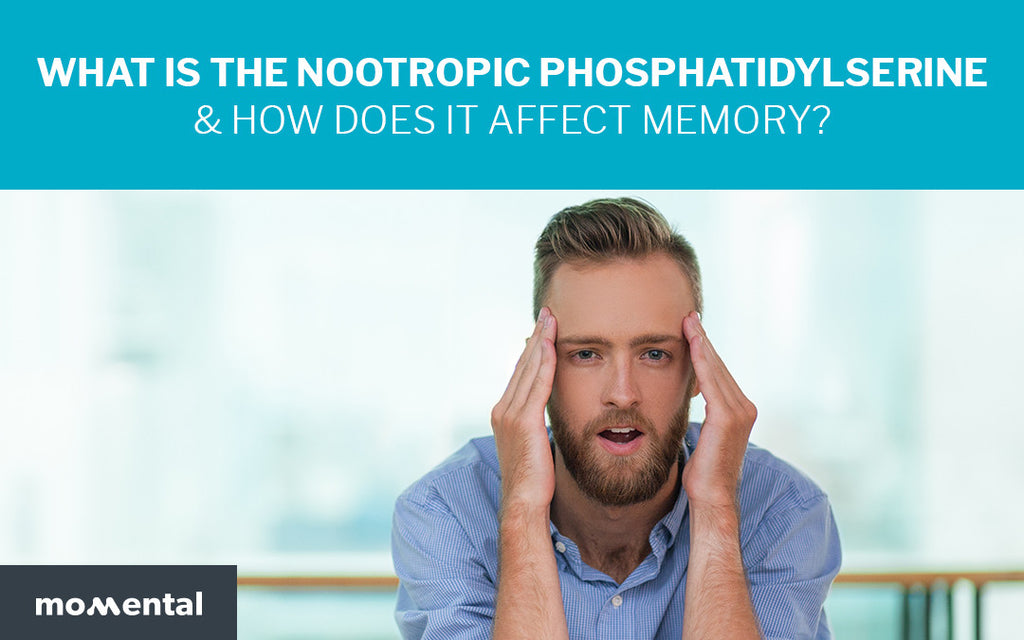 What is the Nootropic Phosphatidylserine & How Does it Affect Memory? | Momental