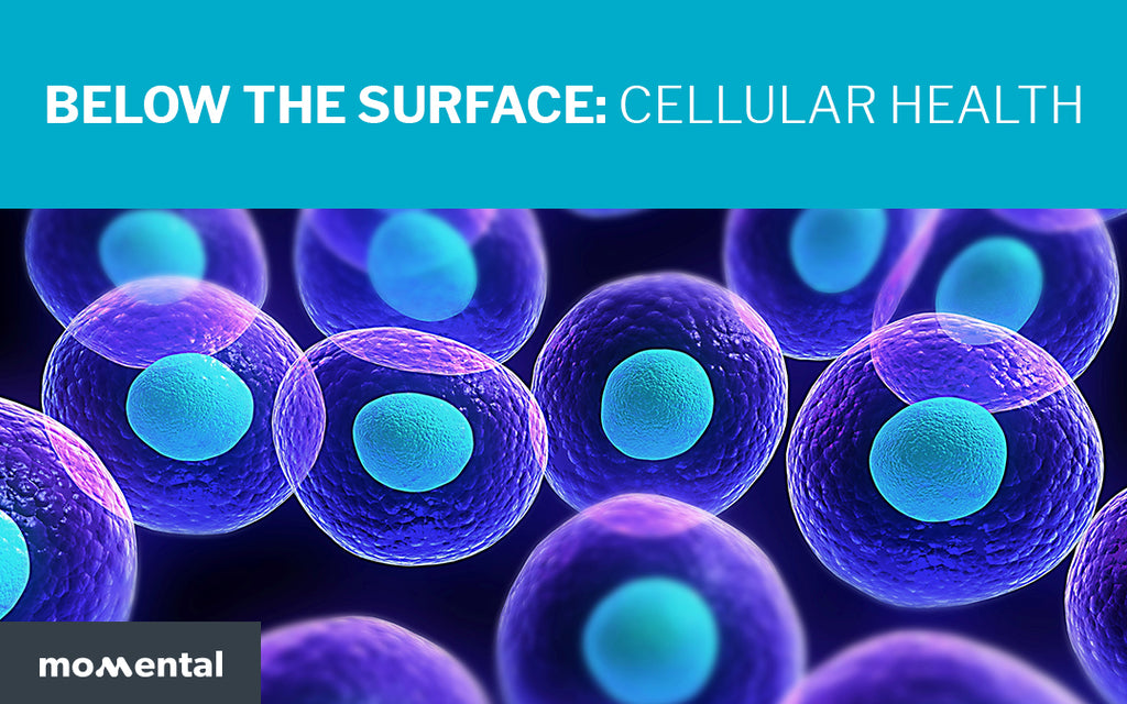 Below the Surface: Cellular Health | Momental Nootropics