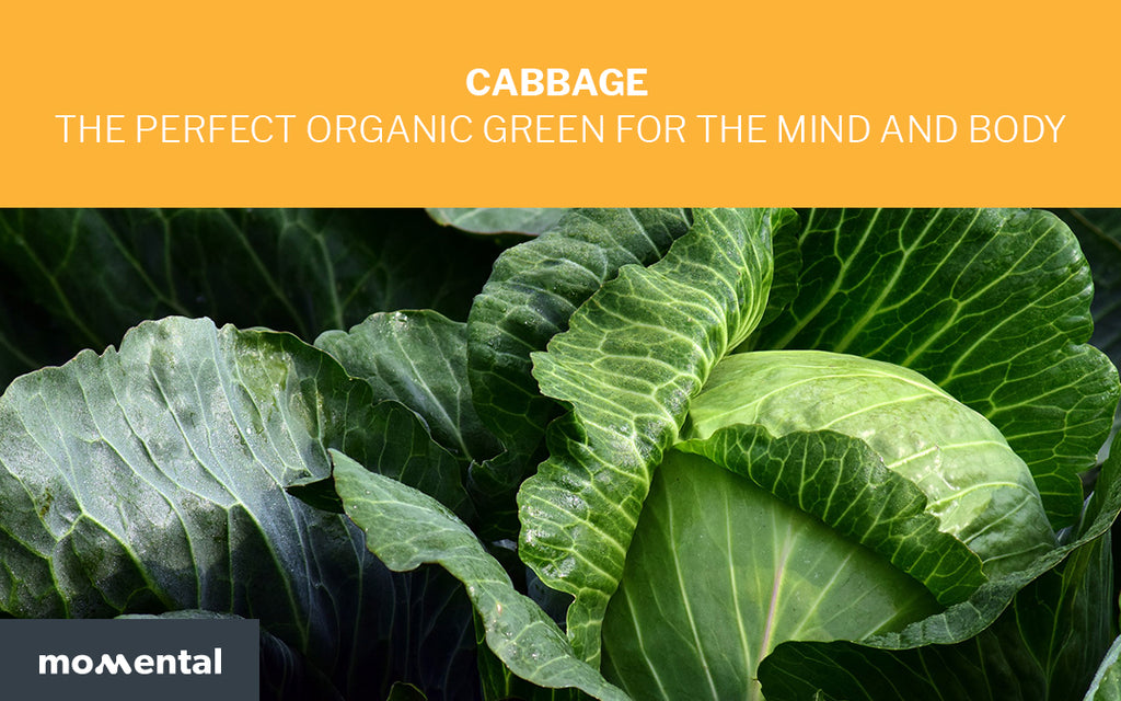 Cabbage Is The Perfect Organic Green for the Mind and Body | Momental Nootropics