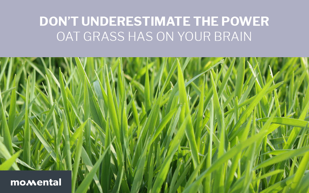 Don't Underestimate the Power Oat Grass Has on Your Brain | Momental Nootropics