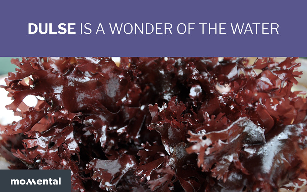 Dulse is a Nutritious Wonder of The Water | Momental Nootropics