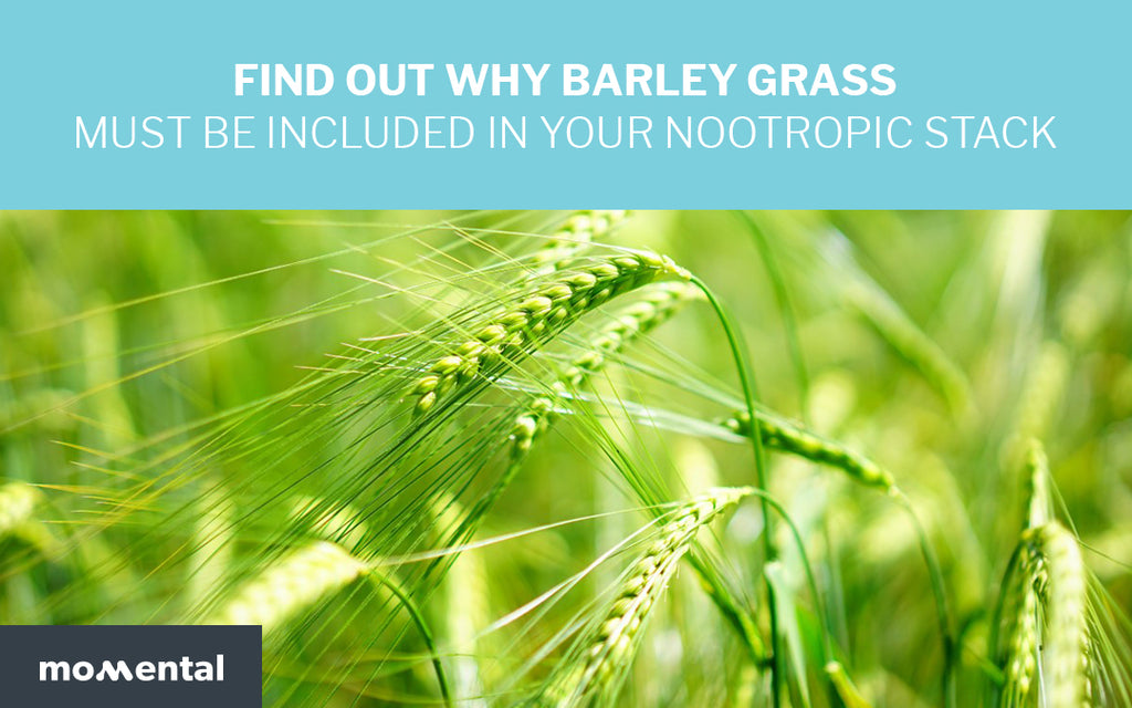 Find Out Why Barley Grass Must Be Included in Your Nootropic Stack | Momental Nootropics