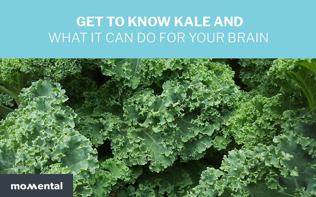 Get to Know Kale and What It Can Do for Your Brain | Momental Nootropics