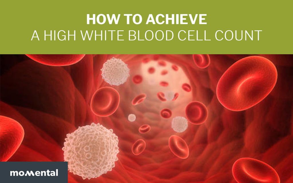 How To Achieve a High White Blood Cell Count | Momental