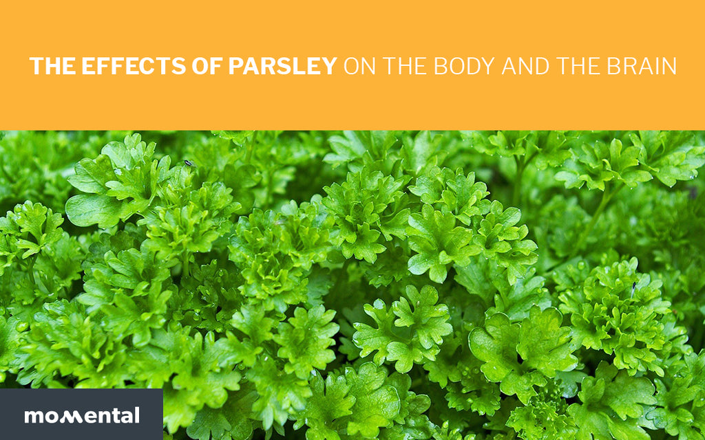 The Effects of Parsley on the Body and Mind | Momental Nootropics