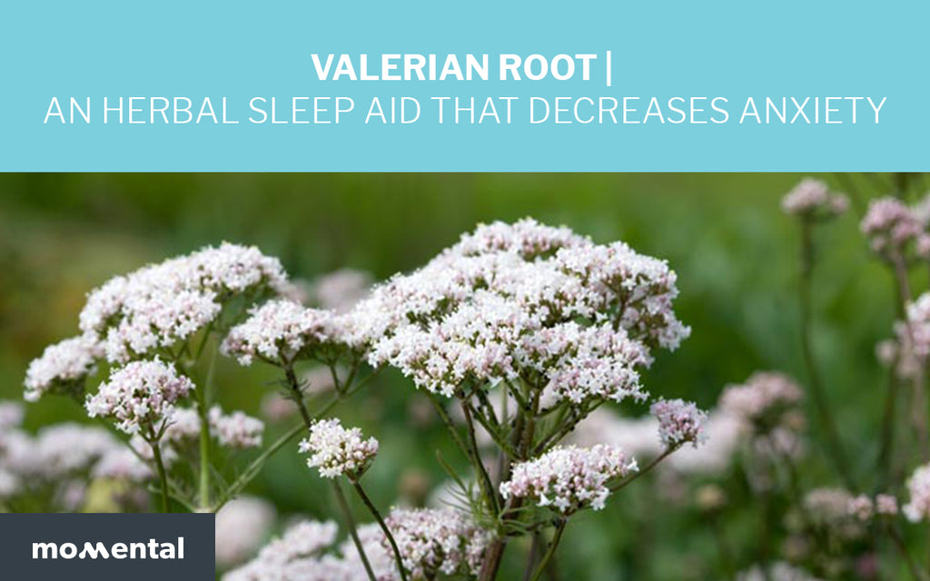 Valerian Root is an Herbal Sleep Aid That Decreases Anxiety | Momental Nootropics