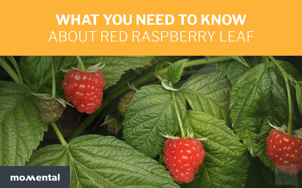 What you Need to Know About Red Raspberry Leaf | Momental Nootropics