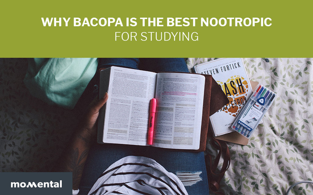 Why Bacopa is the Best Nootropic for Studying | Momental Nootropics