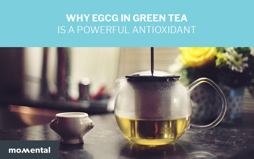 Why EGCG in Green Tea is a Powerful Antioxidant | Momental Nootropics