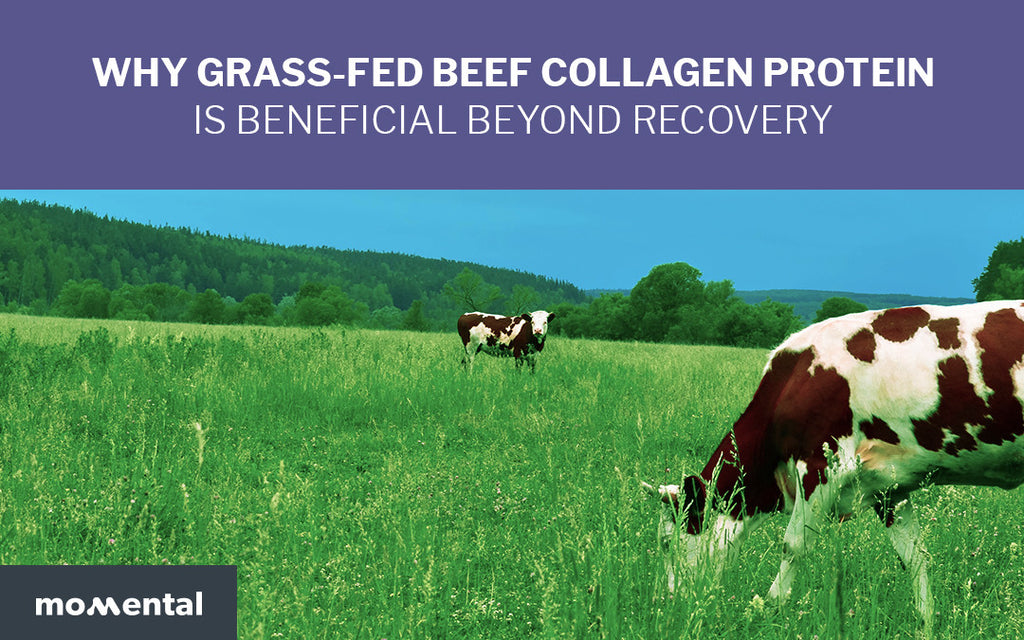 Why Grass-Fed Beef Collagen Protein is Beneficial Beyond Recovery | Momental