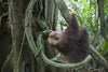 "CALL TO ACTION – the sloth ""sanctuary"" of Oregon"