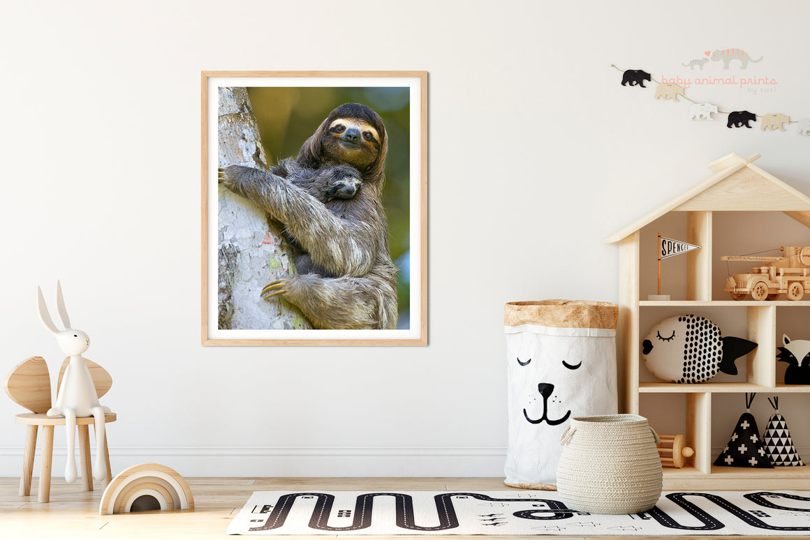 BABY THREE-FINGERED SLOTH WITH MOM PHOTO PRINT