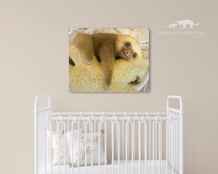 BABY TWO-FINGERED SLOTH PHOTO PRINT