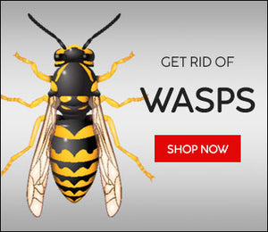 How to kill a wasp