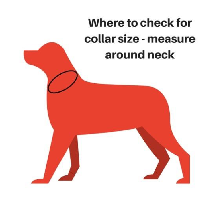 How to measure for our Dog Collars