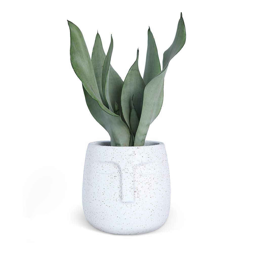 Head Planter 5 Inch Cement Plant Pot with Drainage Hole, Human Face Planter Flower Vase White Concrete Succulent Planter(Plant NOT Included)