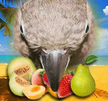 Bird of Pearadise-Max VG-BIRD E-JUICE