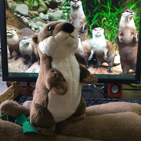 Image of cute otter plush - Gifts For Family Online