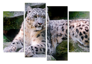 4 Panel Canvas Art Painting Snow Leopard Lie HD Printed Wall Art Poster Prints Home Decor Picture Living Room XA27C