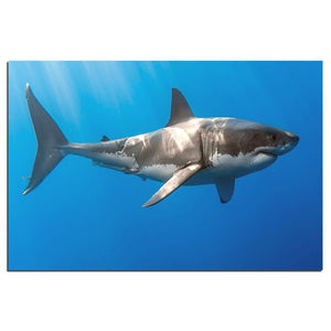 Posters And Print Modern Wall Art Canvas Painting Blue Ocean Shark Fish Animal Wall Picture Living Room Home Decor