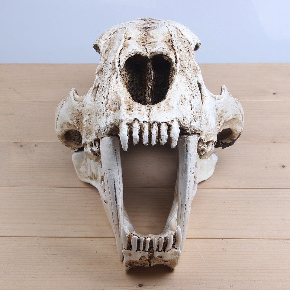 Toothed Tiger Skull Model White Medical Sketch Model For Collection Handmade Home Decoration