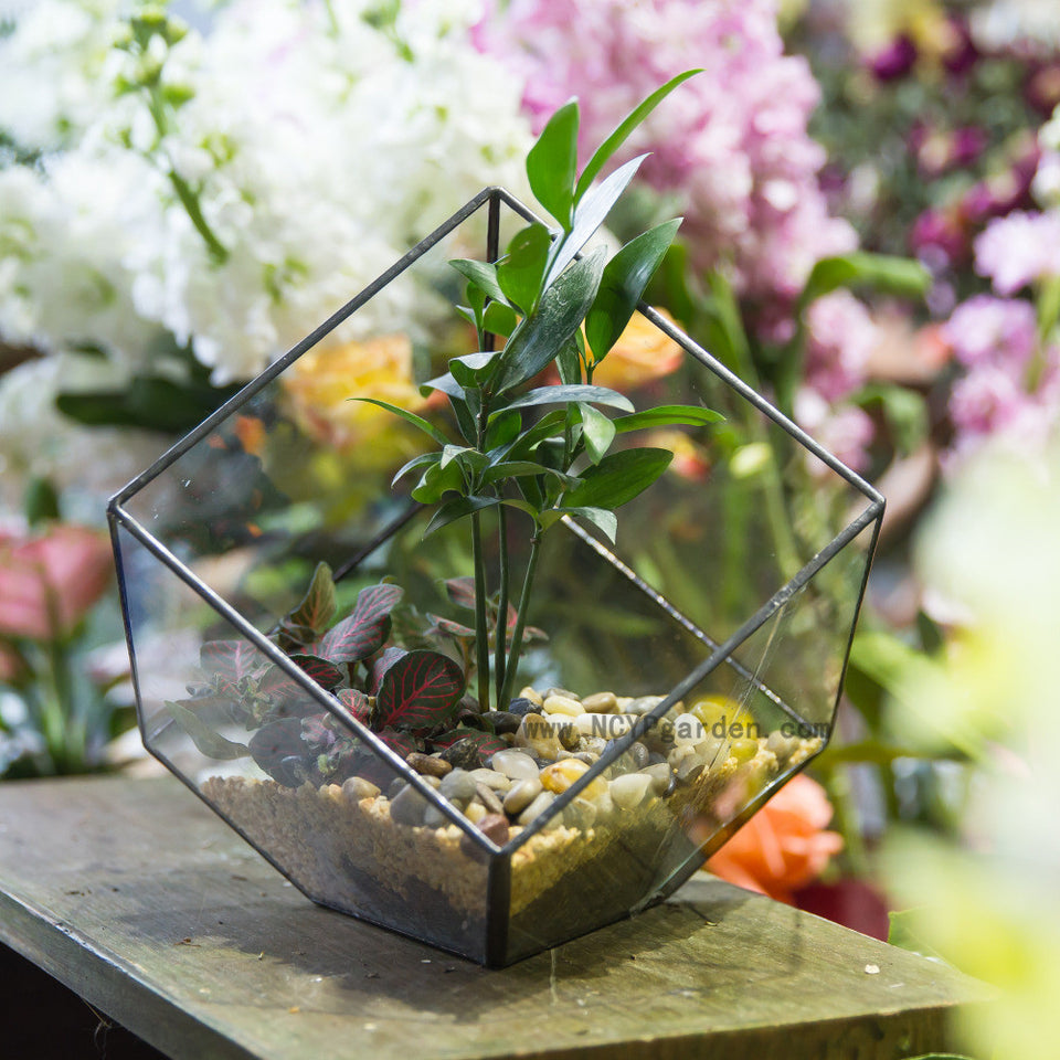 Bonsai Polyhedron Clear Glass Geometric Terrarium Box Tabletop Succulent Fern Moss