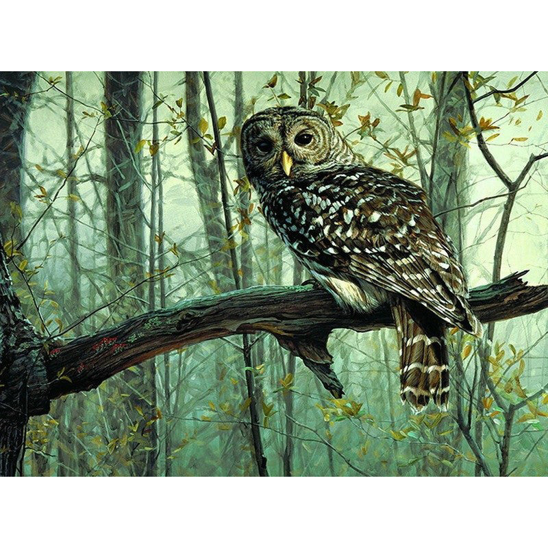 Picture DIY Painting By Numbers Owl Animals Acrylic Picture Kits Drawing Paint On Canvas