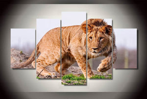 5 Pieces Canvas Art  HD  African Lion Canvas Paintings Home Wall Art Prints Canvas