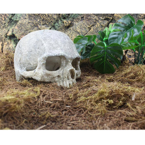 Newest Halloween Aquarium Decorative Resin Skull Crawler Dragon Lizards Decoration