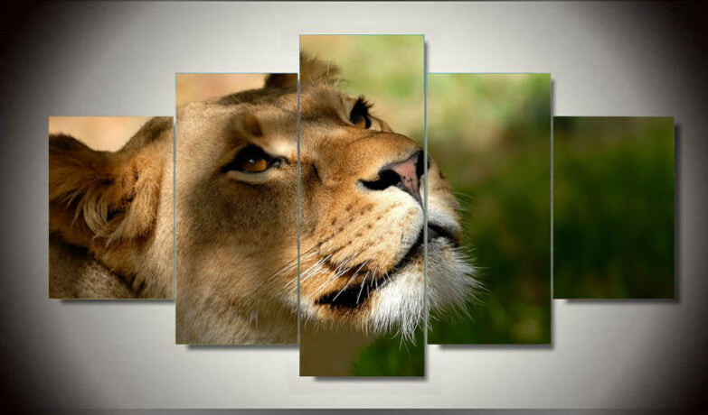 5 Pieces Grassland Animal Lion Modern Painting Canvas Art HD Print Painting Canvas Wall Picture