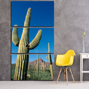 3 Piece Canvas Art HD Print Cactus Green Plants Painting Nature Picture Living Room Wall